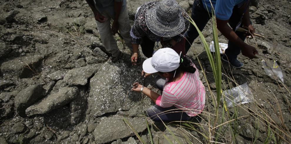 La fascinante historia del surgimiento del istmo de Panamá guarda misterios