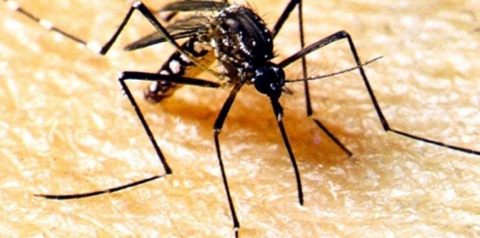 Nicaragua emite alerta epidemiológica para detener propagación de dengue