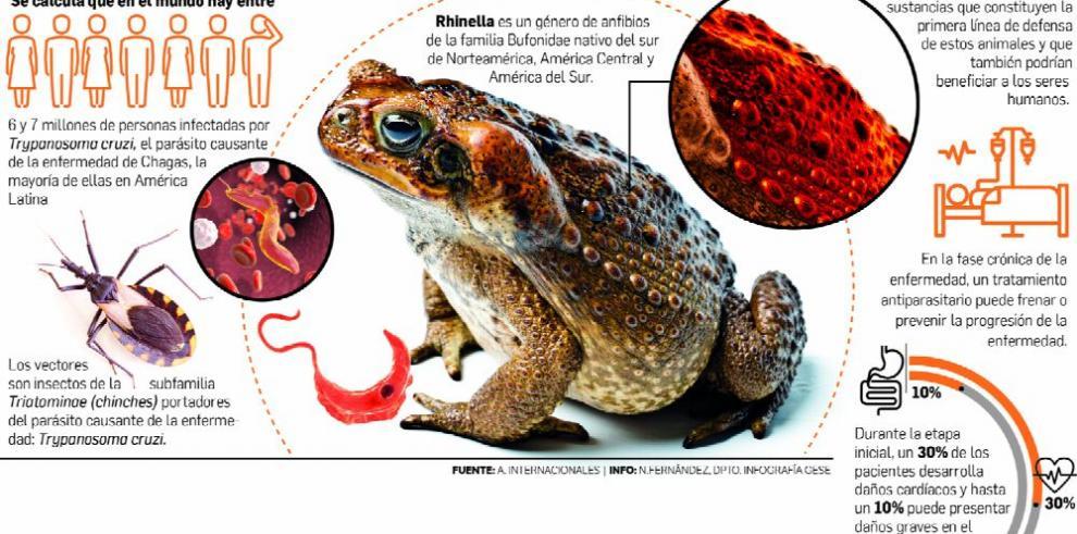 Anfibios tienen en su piel la cura del mal de Chagas