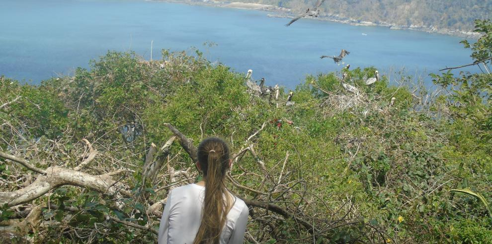 Instituto Smithsonian advierte que isla Boná está en peligro