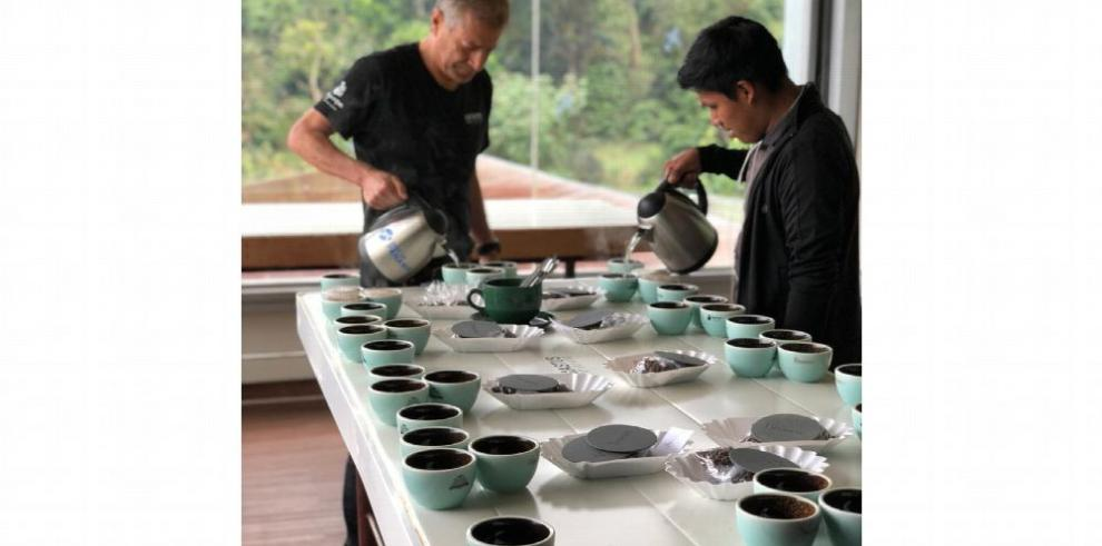 Café geisha panameño seduce el paladar chino