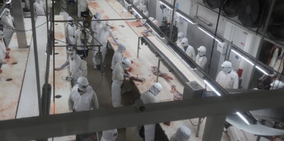 Inicia sacrificio de bovino panameño para exportar carne a China en junio