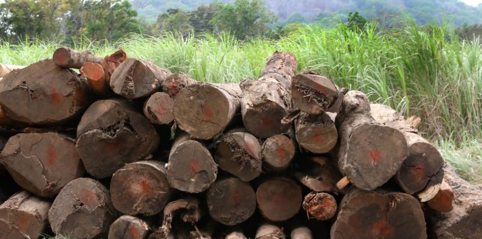 Sin precisar, destino de 1,862.55 m³ de madera talada