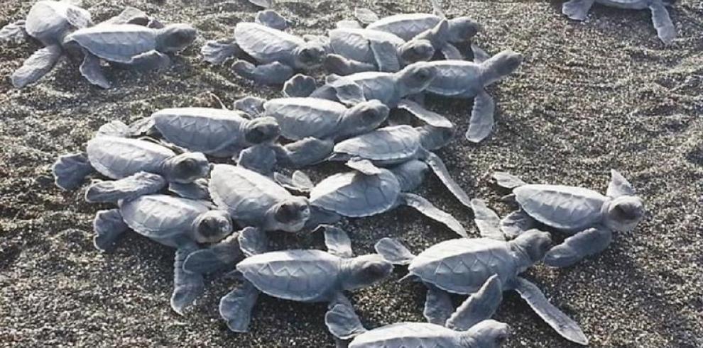 Rescatan en Bogotá 1.300 tortugas que iban a ser comercializadas ilegalmente