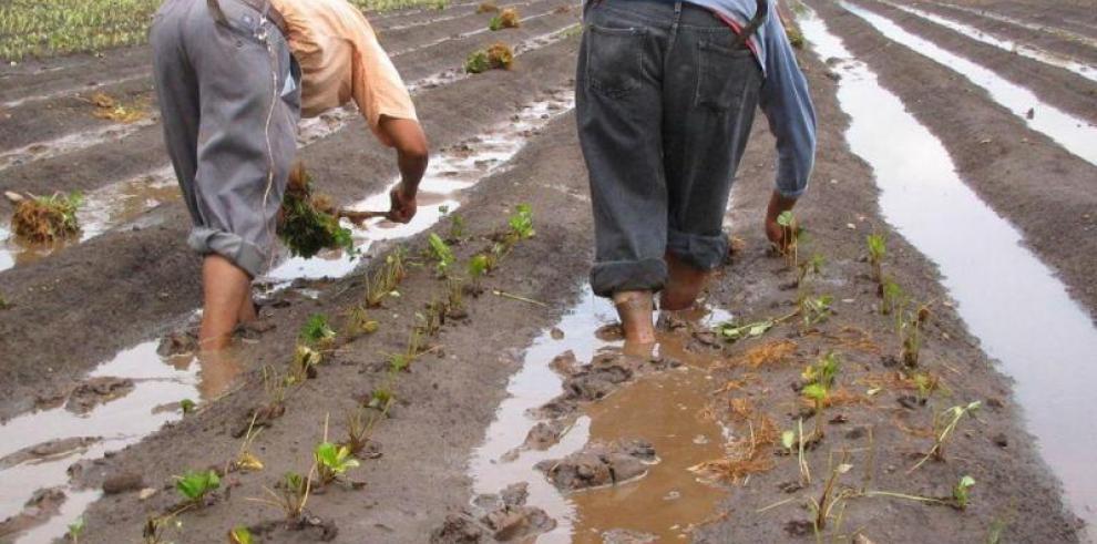 Activan convenio para impulsar el plan del agro en la región occidental de Panamá