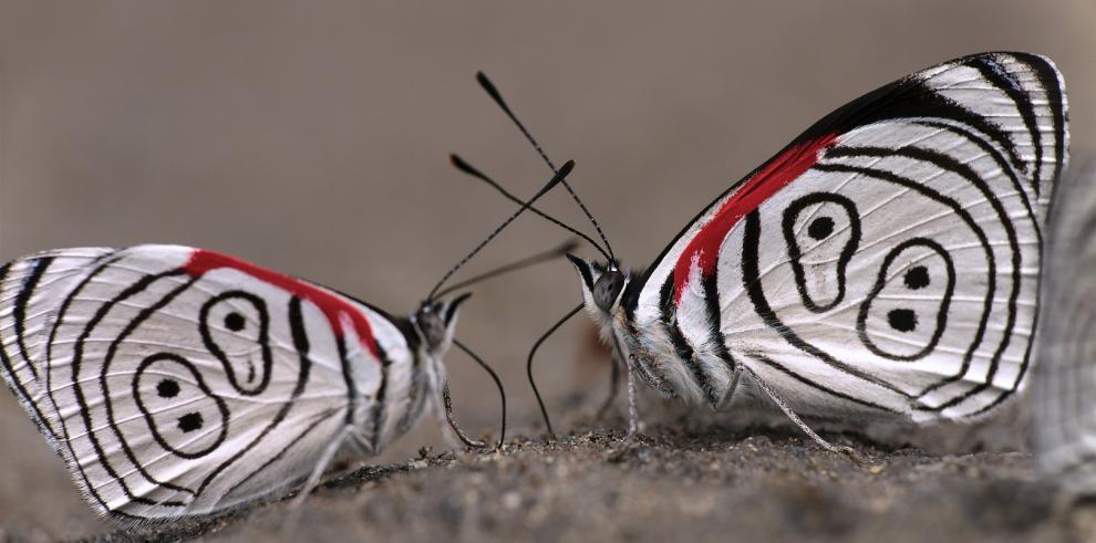 Los insectos necesitan empatía