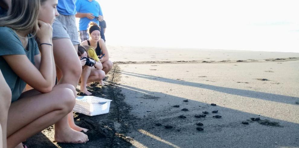 Mata Oscura, paraíso de anidación de tortugas marinas en Veraguas