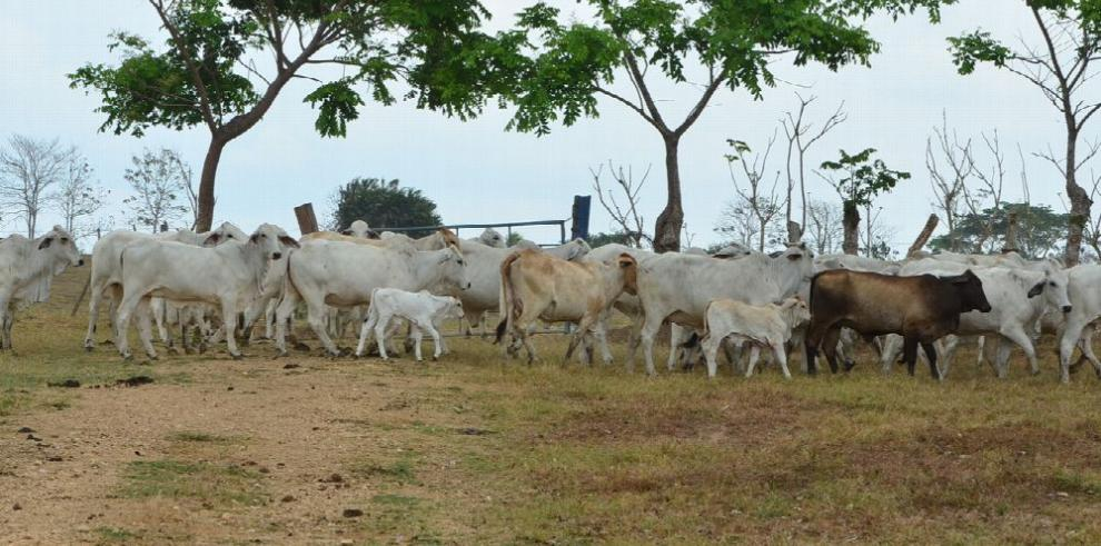 BDA concentra préstamos en ganadería