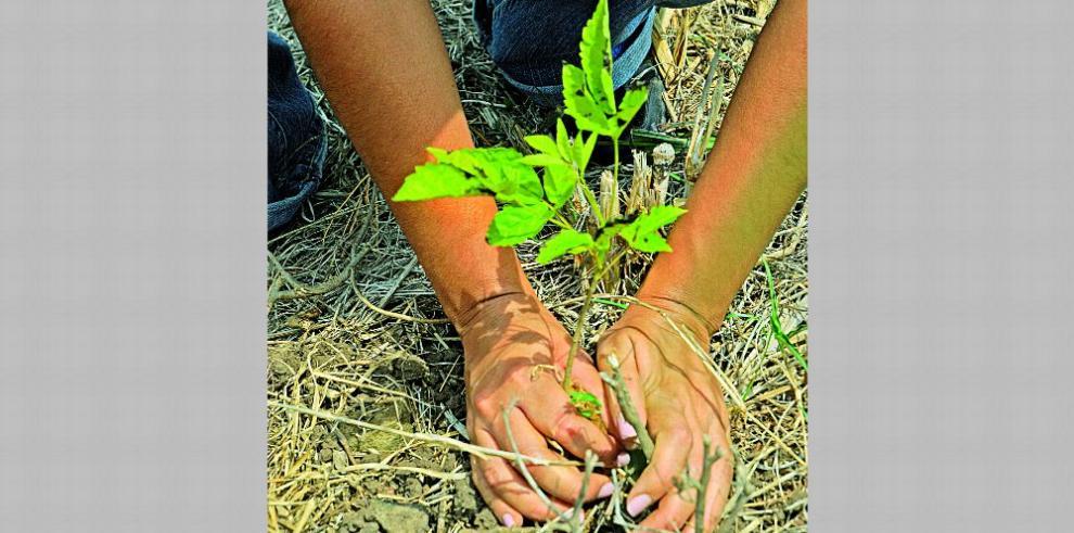 Organizan siembra de plantones en El Valle