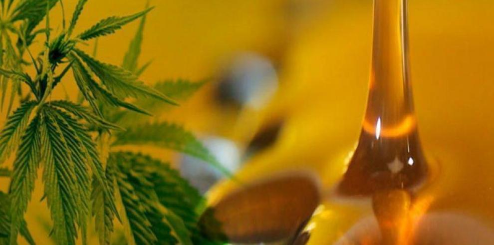 Expertos: Abaratar el cannabis medicinal dependerá de entrada de más empresas