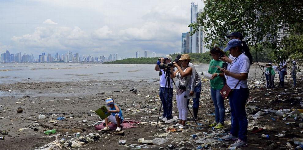 SOS para los manglares: la presión humana los extingue