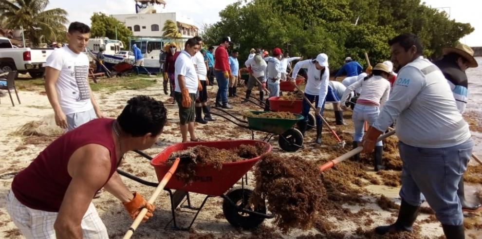 La plaga del sargazo marca un repunte en las playas del Caribe mexicano