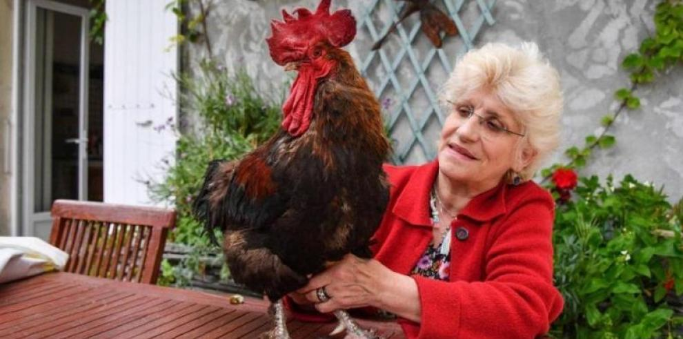 Sentencia para el gallo Maurice, por cantar muy temprano se conocerá en septiembre