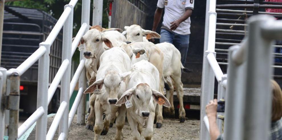 En 2018 creció el hato de bovinos y de aves de corral