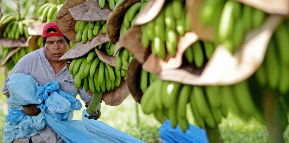 Banano y madera impulsan las exportaciones panameñas
