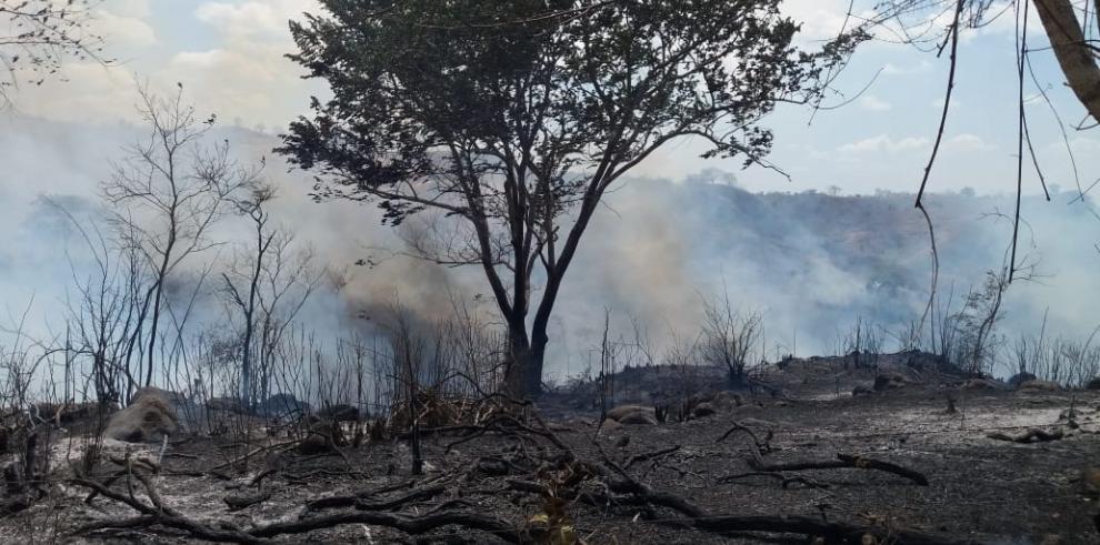 Bomberos han sofocado 5,165 incendios forestales durante el año