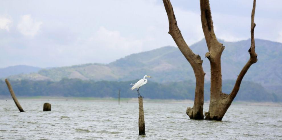 El Niño impacta las operaciones de navegación del Canal de Panamá