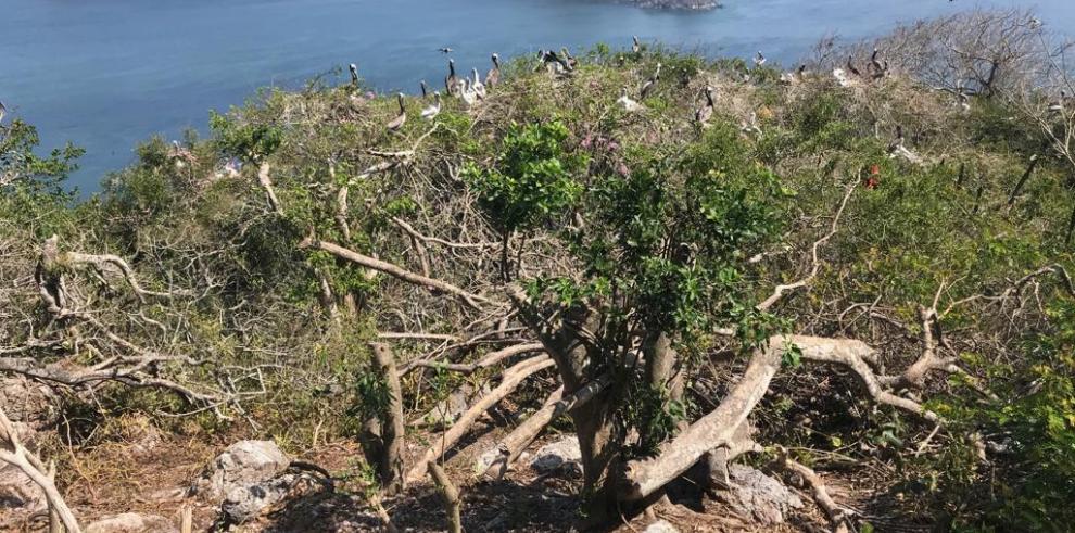 CIAM presenta denuncia por daños causados a isla Boná