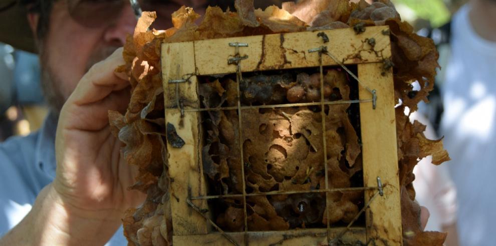La apicultura, herramienta para el empoderamiento de mujer rural colombiana