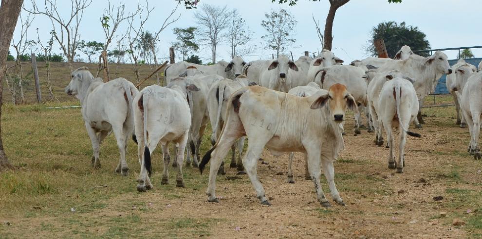 FAO organiza censo agropecuario mundial de 2020