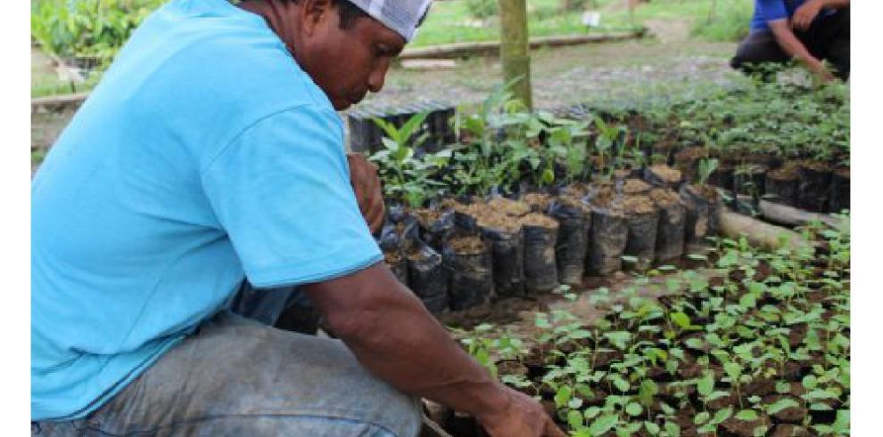 Programa de resocialización en cárcel de Bocas del Toro aportará en reforestación