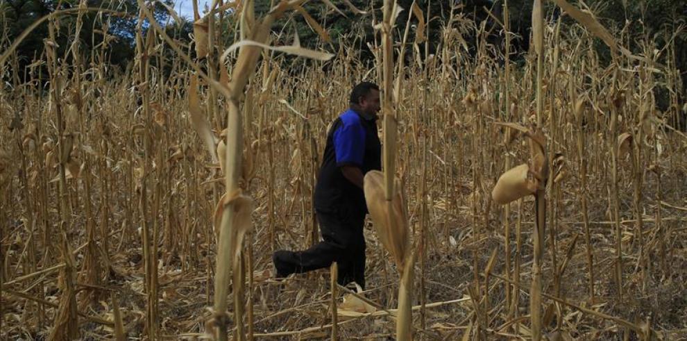 Productores agrícolas hondureños se aprestan a enfrentar severa sequía