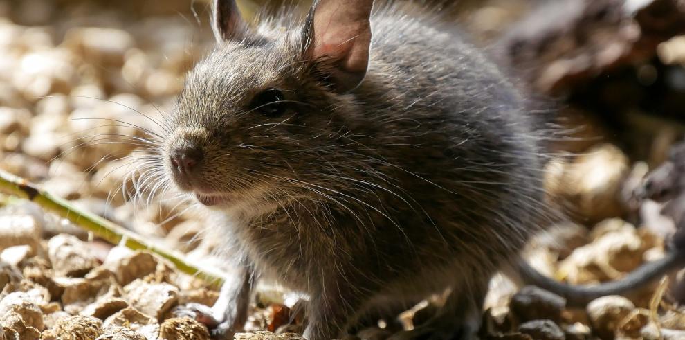 Cazadores de ratas en Nueva York o cómo hacer frente a esos incómodos vecinos