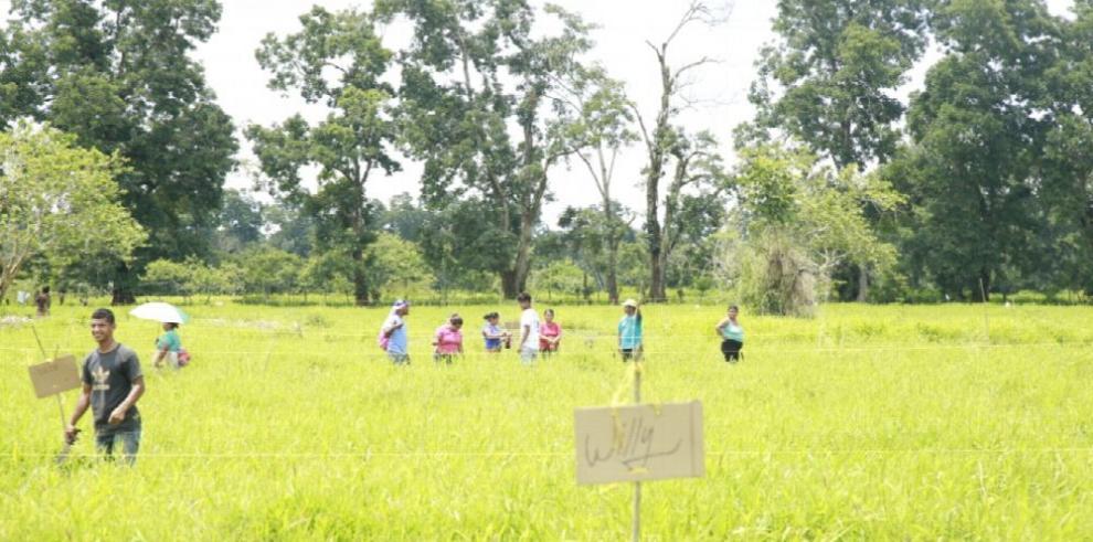 Precaristas en Bocas del Toro se resisten a salir de terreno privado invadido