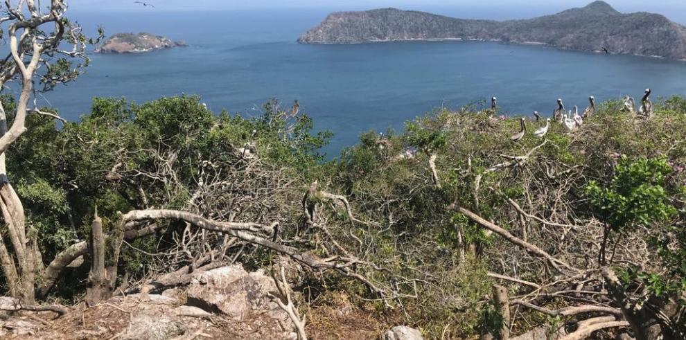 Defensoría abre dos quejas por caso de isla Boná