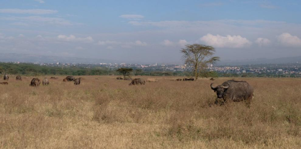 Kenia alerta de la