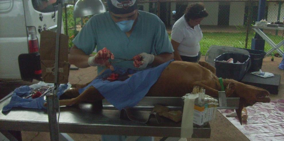 Promueven jornada de esterilizaciónpara evitar el exceso de animales callejeros