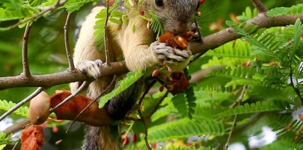 Ecuador presentará listas rojas de especies amenazadas de vida silvestre