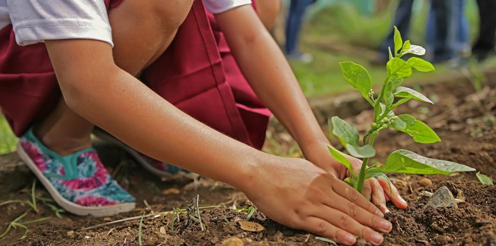 MiAmbiente realizará jornada de reforestación en todo el país