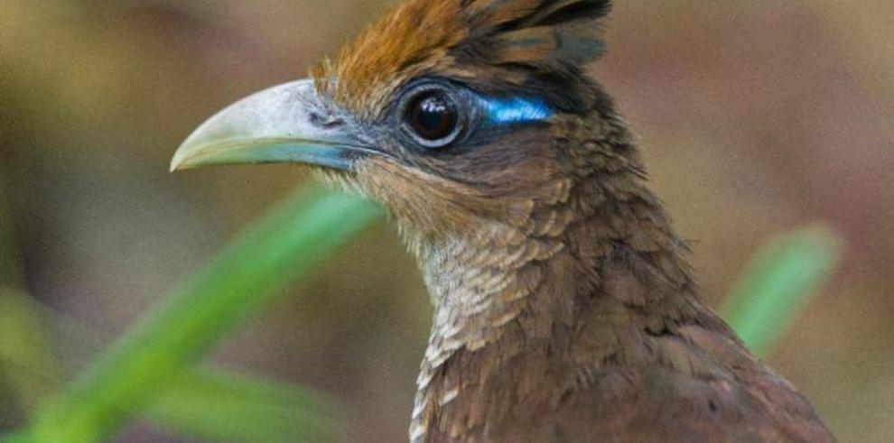 El avistamiento de aves en la era tecnológica