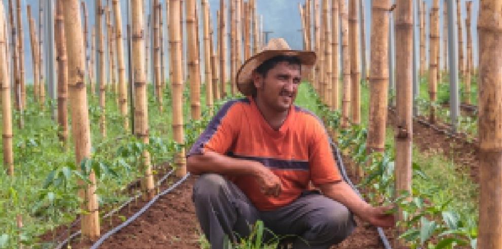Plantar árboles y cosechar lluvia ideas clave para enfrentar desastres naturales