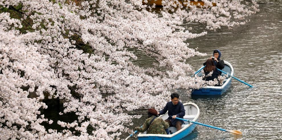 Las calles de Tokio se llenan para celebrar la plena floración de los cerezos