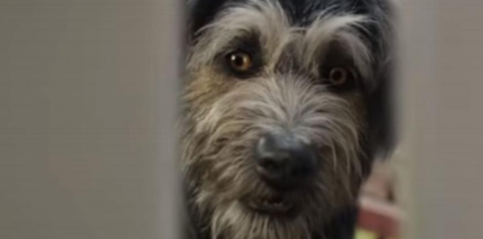 Monte: La historia del perro rescatado que actuará para Disney