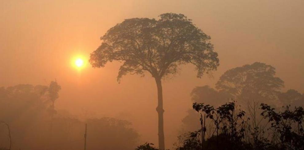 Árbol más grande de Amazonía está a salvo