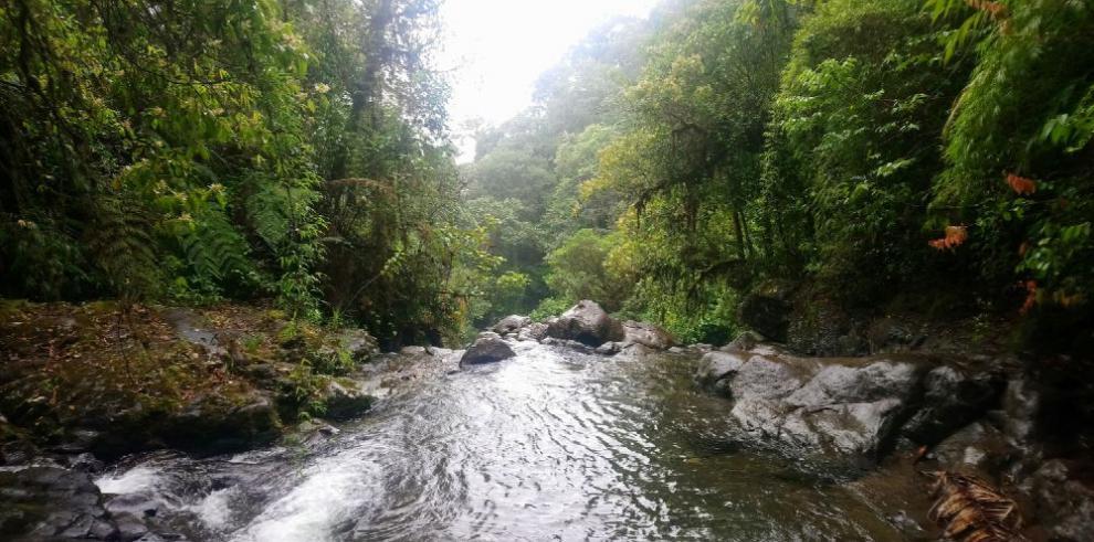Tala de bosques milenarios pone en riesgo herencia natural