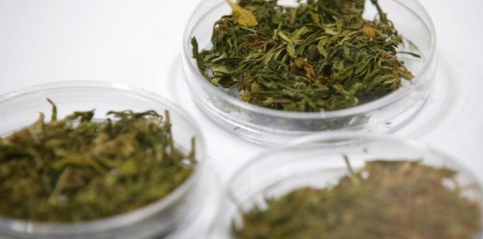 Capturan a salvadoreño con 45 kilos de marihuana valorados en $52,440