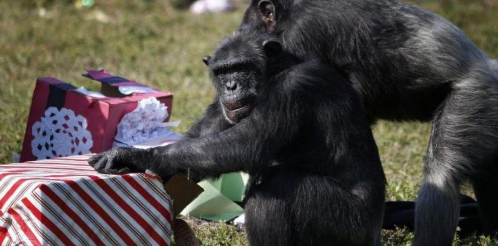 El bosque, un 'supermercado' para humanos y los últimos chimpancés en Senegal