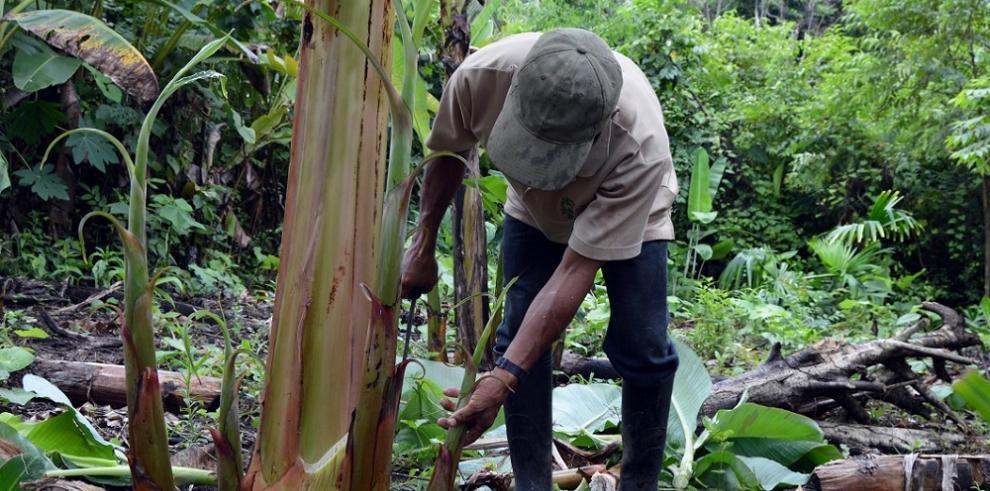 Revitalizar los sistemas agroalimentarios indígenas para lograr el hambre cero