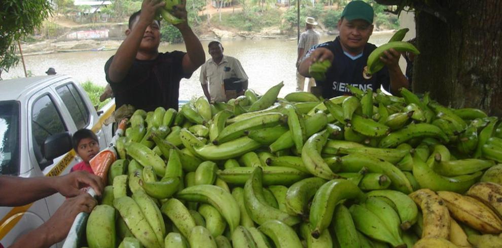 Panamá implementa controles de sanidad por hongo de plátano