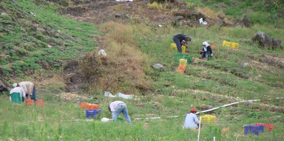 FAO alerta sobre desaparición de la biodiversidad de los sistemas alimentarios