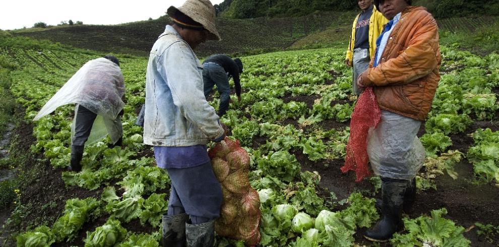 'La agricultura y el medio ambiente deben volver a casarse',dice Truitt Nakata