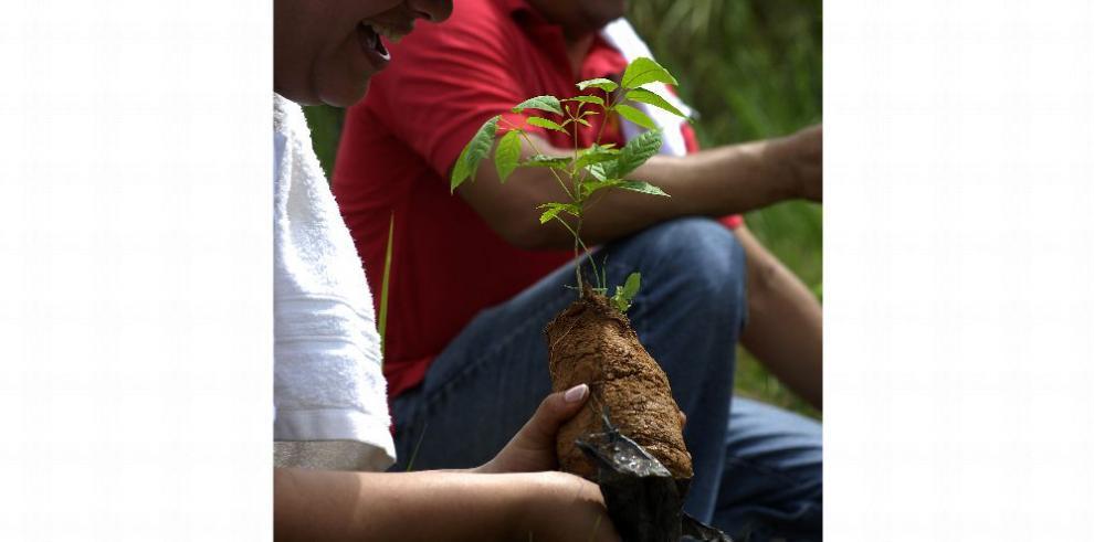 Reactivan los incentivos reforestales y de bosques