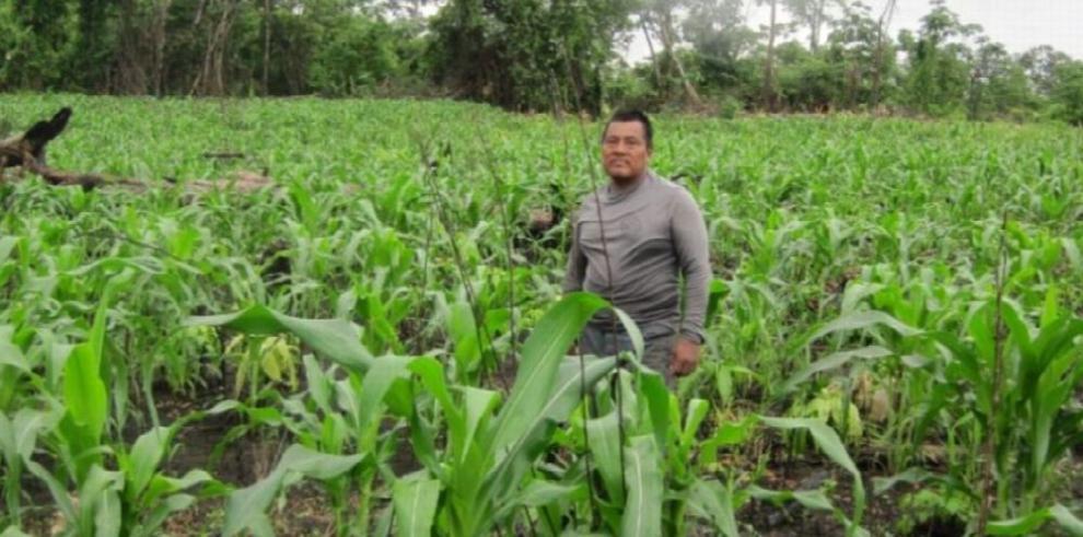 Indígenas buscan mejorar su producción agrícola
