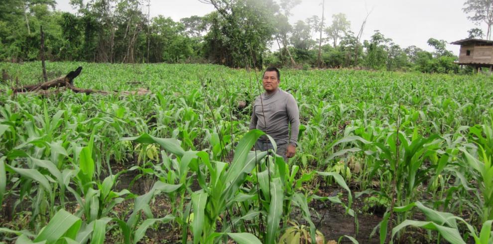 Comunidades indígenas rescatan productos tradicionales del agro