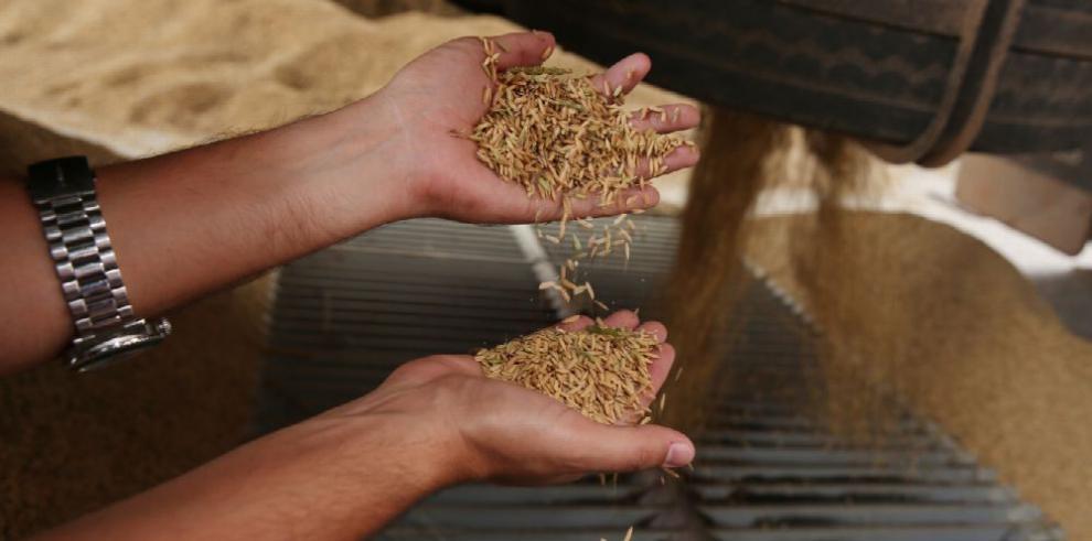 Aprueban traslado de partida por $500 mil para subsidio de arroz