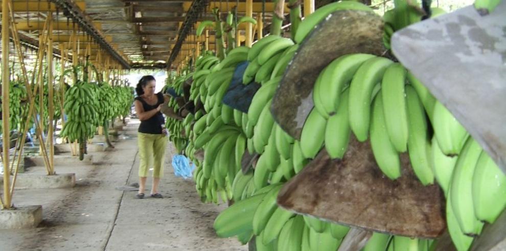 Exportación de banano y café suben en el 2017